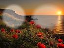Por do sol com rosas