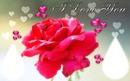 I Love You-2 Pics