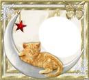 chat doré