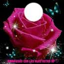 Rosa de mariposas