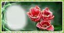 Schenk Blumen