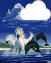 chevaux et dauphins