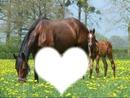 Les chevaux !! <3