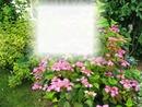 Cadre nature et fleurs