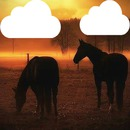 chevaux 2 photos cadre