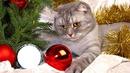 le petit chat de noel 2016