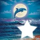 love dauphin