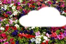 sobre un colchón de flores