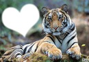 coeur de tigre