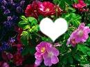 *parfum de fleurs*