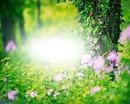 Nature fleurs