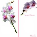 carte postale orchidée