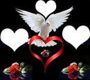 colombe avec roses et coeurs 3 photos