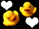 2 canards en caoutchouc-deux photos