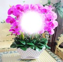 flores de Mayelita
