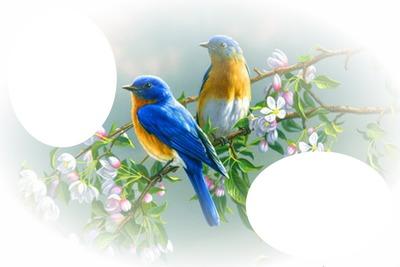 montage photo oiseau bleu et jaune pixiz. Black Bedroom Furniture Sets. Home Design Ideas