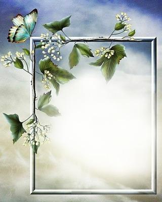 Nature fleurs et papillon