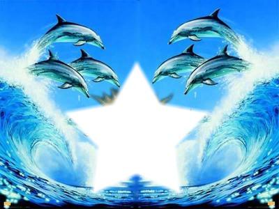 Foto de un delfin naciendo 64