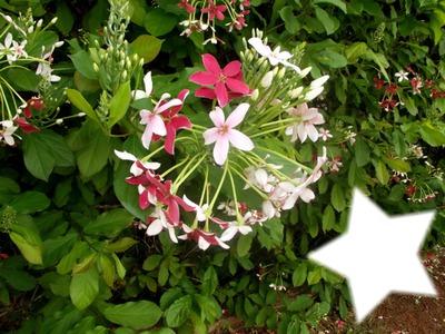Montage photo fleurs des tropiques - Pixiz