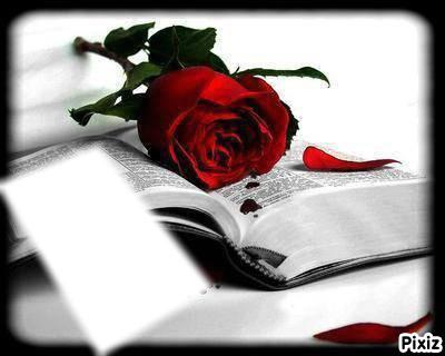 """Résultat de recherche d'images pour """"fleurs d'amour"""""""