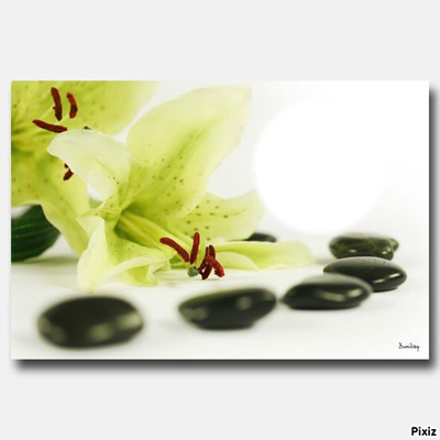 fleurs zen galets