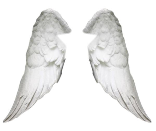 Montage photo ailes d 39 ange pixiz - Ailes d ange dessin ...
