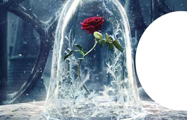 montage photo la rose enchanthee de la belle et la bete. Black Bedroom Furniture Sets. Home Design Ideas