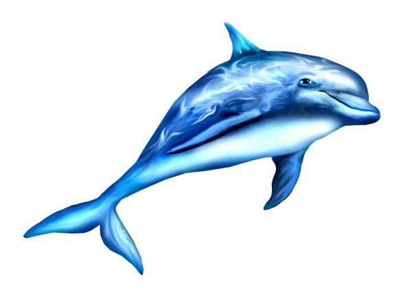 картинки дельфины для раскрашивания