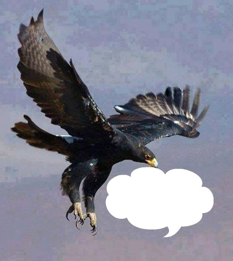 rencontre avec un aigle