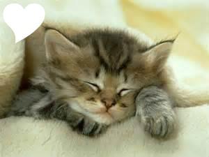 Image Chat Mignon photo montage chat mignon - pixiz