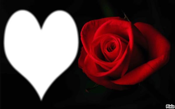 Черно-белое фото с красным цветок