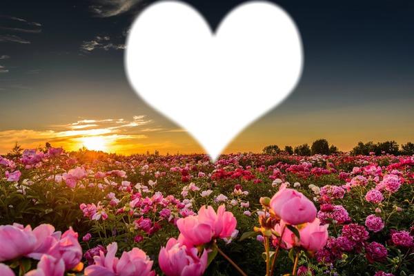 Montaje fotografico jardin de rosas - Pixiz