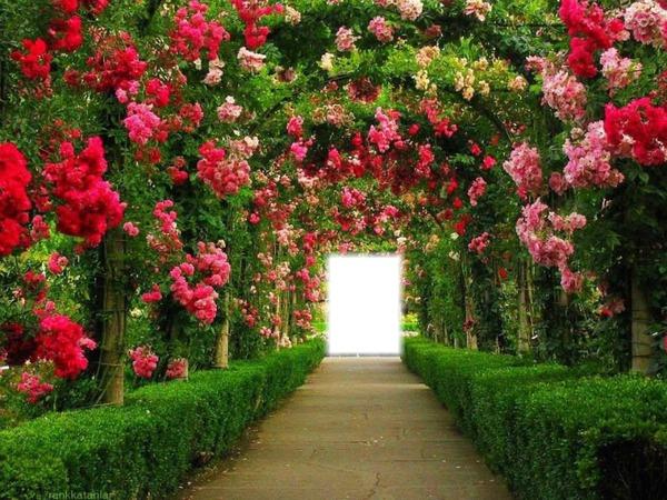 Imagenes De Jardines Con Flores: Montaje Fotografico EL JARDÍN DE LAS FLORES