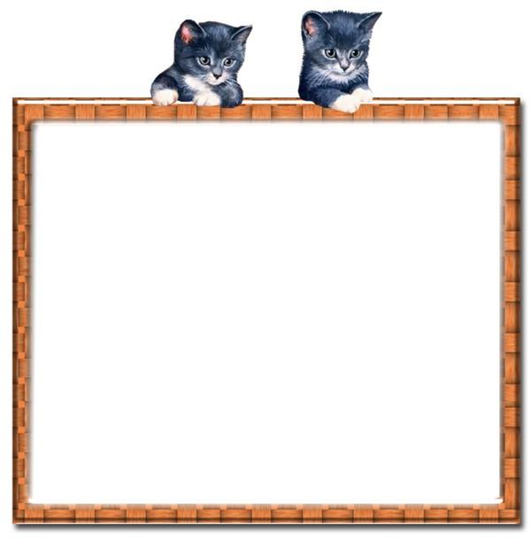 montage photo quot cadre avec des chats quot pixiz