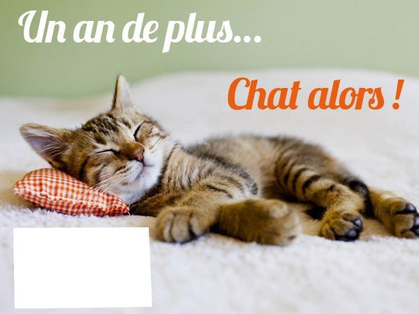 Fabuleux Photo montage joyeux anniversaire chat - Pixiz TD84