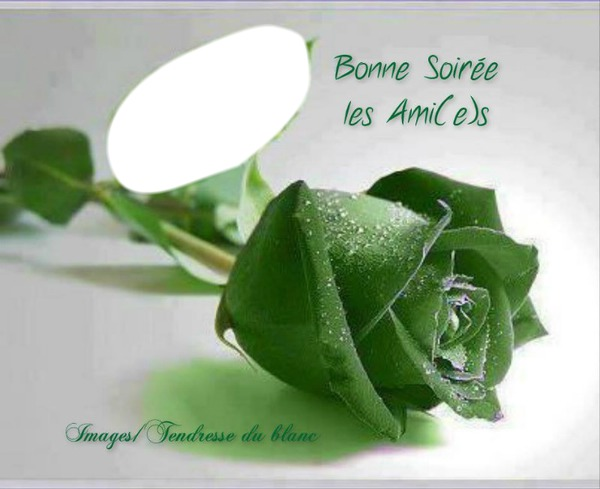 photo montage rose verte pixiz photo montage rose verte pixiz