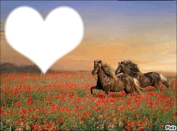 Montaje fotografico caballos - Pixiz
