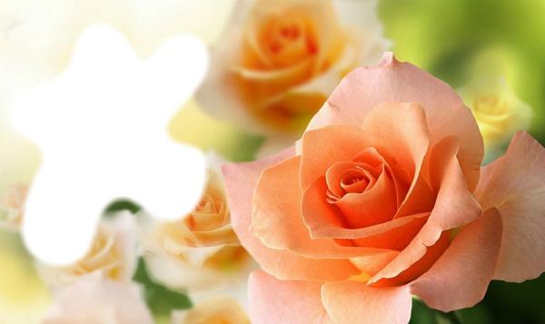 Персиковый цвет картинки