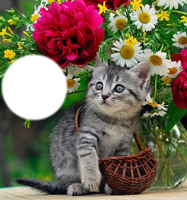 Открытка с котом и цветами 1