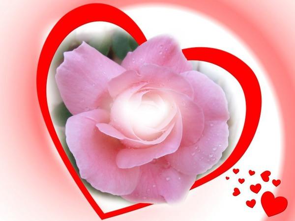 Красивый розовый открытки