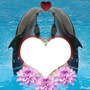 2 dauphins amoureux 1 photo