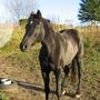 Un cheval... La joie !