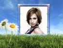 Margarida da primavera