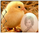 Egg and chick