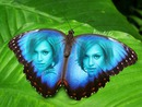 Inlay in blue wings butterflies with text