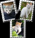 3 kaķu attēli
