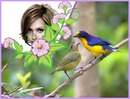 Fugle og blomster