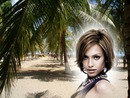 Плажни палми
