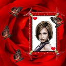 Red Rose Butterflies Heart