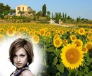 Landscape Sunflowers field Provencal farmhouse
